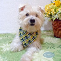 Sunny Yellow, Blue and Green Plaid Spring Dog Bandana