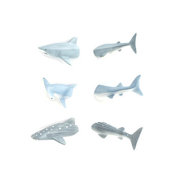 Kikkerland Design Inc » Products » Shark Butt Magnets