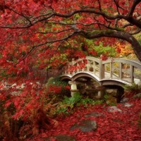 Japaneese Garden Bridge Amazing Wallpaper and Picture | Imagesize: 192 kilobyte