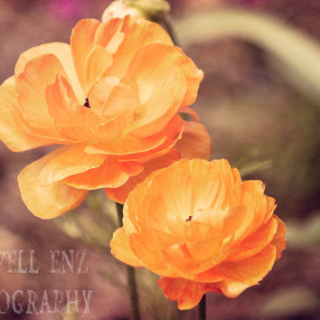 Poppies 5x7 Orange Poppy Fine Art Print Flower Photography Floral Home Decor Wall Art Nature Photography