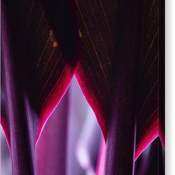 Purple Flower - Canvas Print