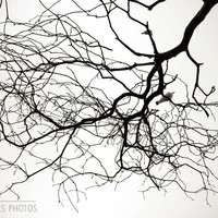 Tree canvas, nature photography, minimalist, black and white photography, white decor, large wall art, bird in tree, 16x24,24x36,32x48