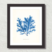 Vintage Indigo Blue British Seaweed No. 5 Canvas Print