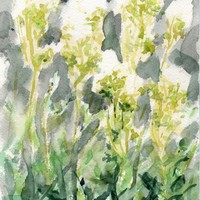 Meadowsweet Original Watercolor Outdoor Painting