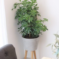 """Large Berlin Wood and Concrete Ceramic Plant Stand - 27"""" Tall"""