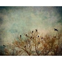 Birds in Tree Branches Pause 8x10 Fine Art Photograph by by eyeful