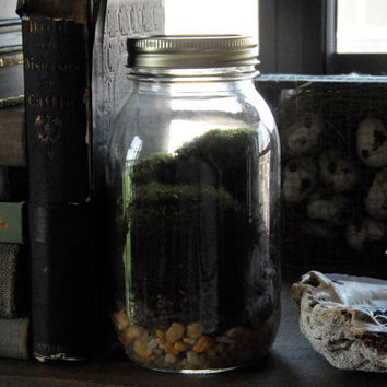 Mason Jar Moss Terrarium by Vertegris on Etsy