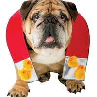 Zelda Chick Magnet Dog M/l Costume