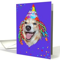 Colorful Happy Birthday Card with Merle Border Collie card