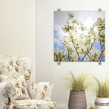 White Dogwood  Artwork - Blue White Flower Photograph