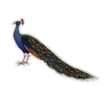 Peacock Bird Magnet