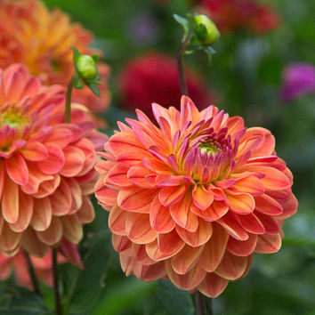Orange Flower Cards Zinnia Note Cards Floral Note Cards Photo Flat Cards Nature Photo Cards fpoe 123 Team