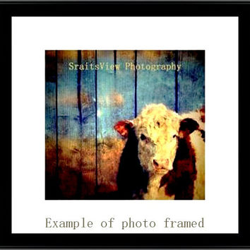 color photo print of white face cow , cattle , against wood background ,farm decor, farm art, country photos