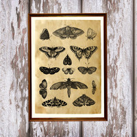 Cabin poster Butterflies print Antique art Insect decor AK236