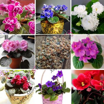 100 pcs african violet seeds Moonstone bonsai flower seeds perennial potted plant seeds for home garden