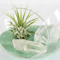 Terrarium Kit - Air Plant, Clear Quartz Crystals, and Mint Sand