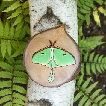 Wood burned luna moth wall hanging. Large green moth wood slice ornament, wall hanging or magnet. Nearctic Saturniid