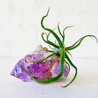 Amethyst Crystal Rock Bulbolsa -  Air Plant Garden
