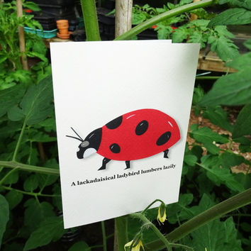 Ladybird card, bright red hand-illustrated animal greeting card featuring a striking red ladybug & clever alliterative phrase