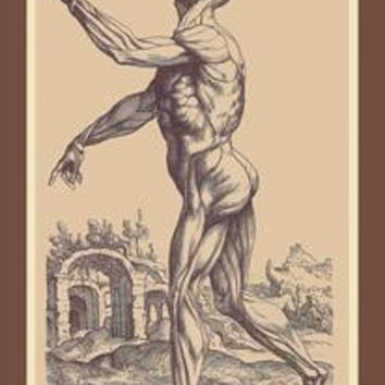 Second Plate of the Muscles: Fine art canvas print (12 x 18)