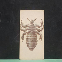 Vintage Insect Flash Card Lice Human Louse Cootie Color Illustration Paper Ephemera Art Decor Nature Bug Collage Crafts Supply