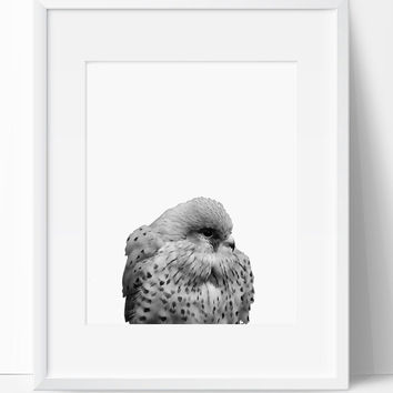 Printable Art, Bird Art, Bird Printable, Digital Print, Bird Print, Wall Art, 8x10, Instant Download, Bird, Black White Art
