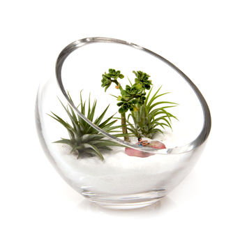 Lost World Terrarium Bowl