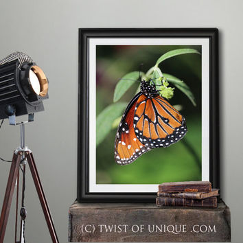 Monarch Butterfly Photography, Wildlife photography, Macro Butterfly photography, Orange Butterfly - Yellow, Orange, black, white