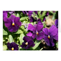 Purple Pansy Card