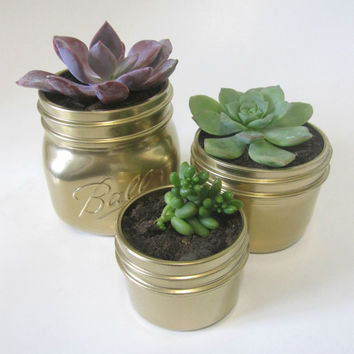 Set Mason Jars with Succulents Gold - Home Decor/Gift, Wedding/Baby Shower Centerpiece