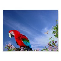 Colorful Tropical Parrot Poster