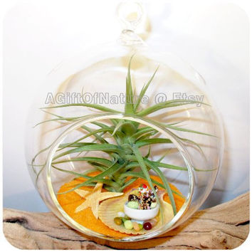 Air Plant Terrarium Gift Hanging Glass Globe Beach Lovers Summer Fun - Tillandsia AirPlant Handmade Miniature Ice Cream Starfish Sand Kit