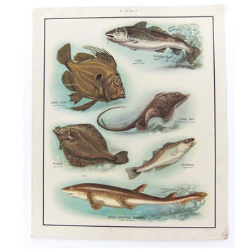 Vintage School Chart, Sea Fish Poster,  Home Decor, Gift for fisherman, Housewares, Wall Hanging, Macmillans Nature Class Pictures
