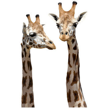 Giraffe Mount Wall Decal