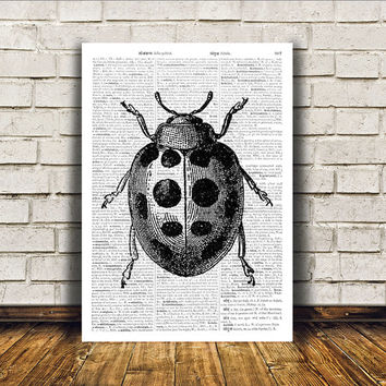 Insect art Ladybird poster Modern decor Dictionary print RTA274