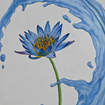 The Water Lily Drawing by Holly Hunt - The Water Lily Fine Art Prints and Posters for Sale
