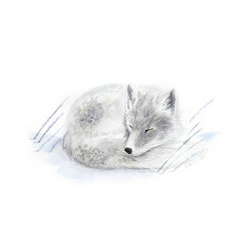 Sleeping Arctic Baby Fox
