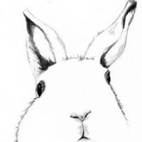 Original Rabbit Drawing Where's Alice by corelladesign on Etsy