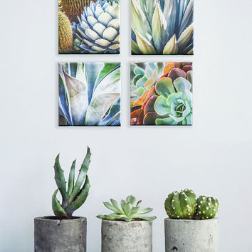 Succulent Photo Set of 4, Square, Succulent Plants, Canvas Gallery Wrap Set, Succulent Wall Art, Desert Home Decor, Photo Paper, Metal