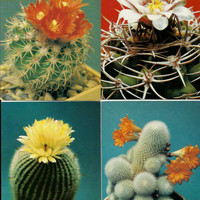 Cacti Cactus - Vintage Russian USSR Postcards  - set of 18