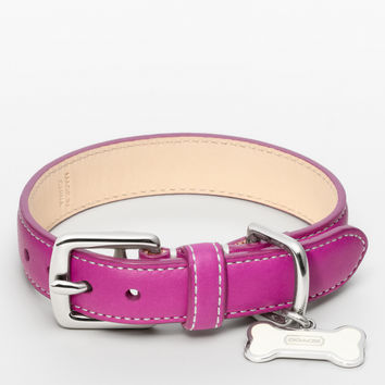 leather collar with bone charm