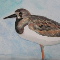 Bird Art, Bird Painting, Bird Watercolor, Sandpiper Painting Shorebird Beach Bird Original Watercolor Painting Ruddy Turnstone