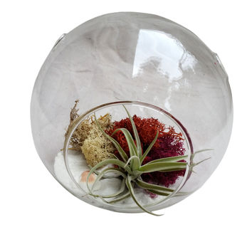 White Beach Airplant Terrarium