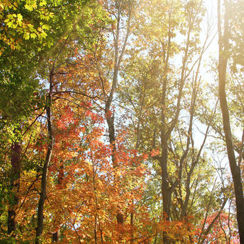 Art Metallic photography Autumn Light 1 Landscape photograph photo wall Print home decor forest ethereal nature yellow orange woods trees