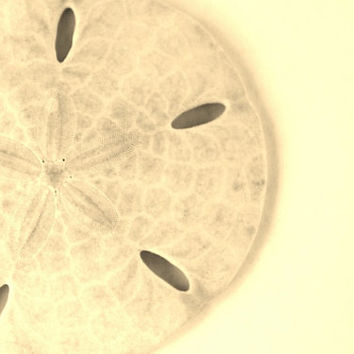 Sand Dollar Art, Black and White Beach Photography, Seashells Home Decor, Beach Art Print