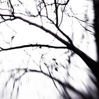 Abstract Branches Photograph, Minimalist, Modern, Tree Branch Fine Art Photography, 8x10 Wall Print