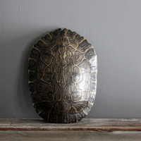 Large Natural Turtle Shell
