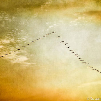 Nature Photography, Geese in Sky, Birds in Flight, Fine Art Print, Golden Sunset Colors, Warm Spring Tones, Wall Decor