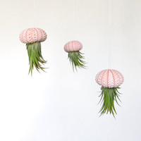 Hanging Air Plant // Ombre Urchin Shell // Unique Home Decor // Tiny