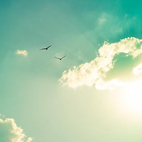 nature photography birds in flight 11x14 16x24 20x30 large photography print summer sunset golden teal art print mint sun green clouds sky